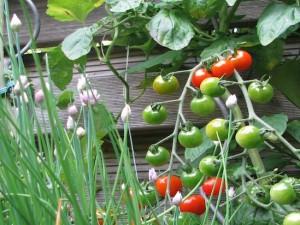 Gemüse, gute Nachbarn, schlechte Nachbarn